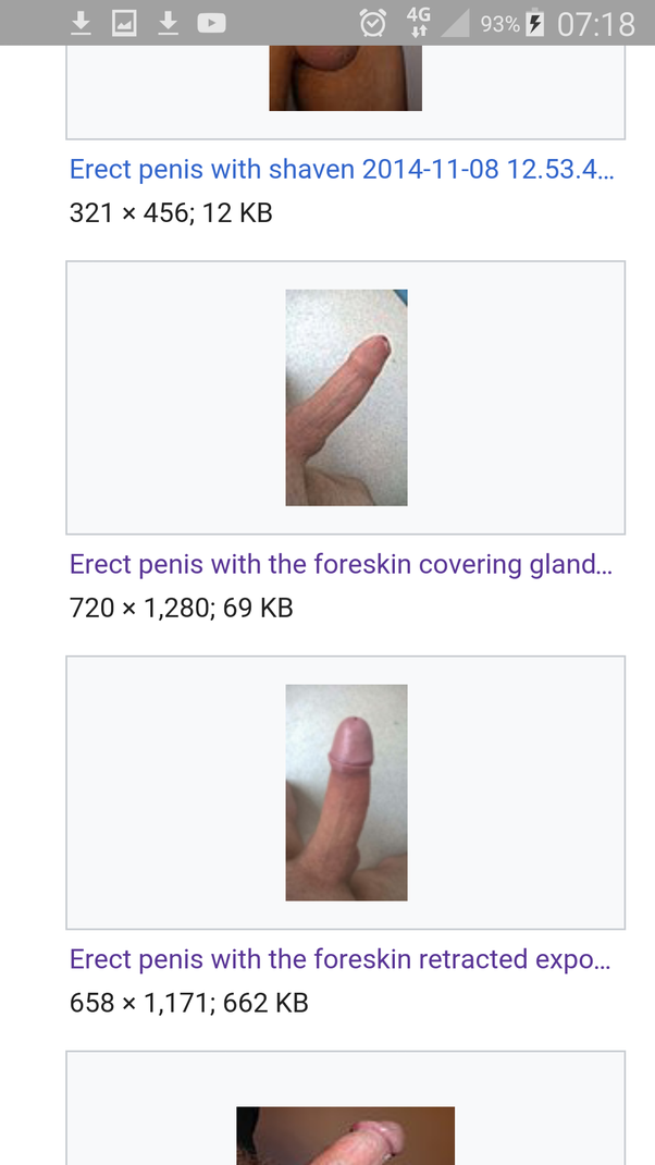 Hard uncircumcised penis erect