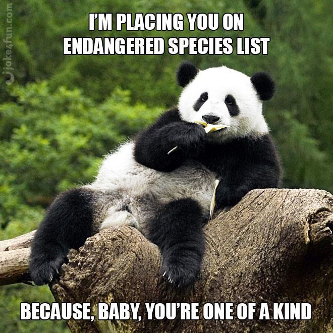 Pickup line panda meme